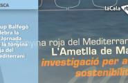 Grup Balfegó celebra la III Jornada de la tonyina roja del Mediterrani