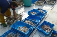 El 2013 es va agafar més peix i va anar més car