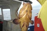 Pescant al palangre