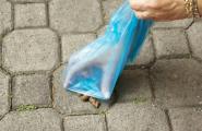 L'Ajuntament vol reduir la presència d'excrements de gossos a la via pública