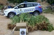 La Policia Local decomissa 138 kg de marihuana en una finca rústica
