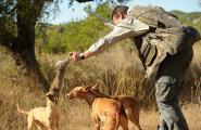 Comença el període de caça menor amb la millor població de conill dels darrers deu anys