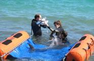 Un dofí varat a la costa calera