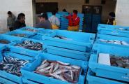 L'«arràs» torna a la mar pescant més peix però a un preu més barat