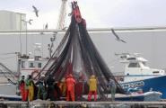 El Parlament aprova per unanimitat una resolució en defensa del peix blau